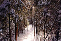 1997-12-bruce-trail-narrow.jpg
