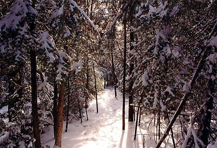 1997-12-bruce-trail-narrow