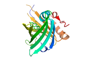Anticalin - 3D structure model of an anticalin (ribbon) in complex with digitoxigenin (sticks)