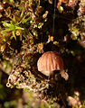 2012-11-29 14-58-04-champignon-sur-arbre.jpg