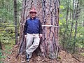2012. Forest entomologist Bill Schaupp (Southwest Oregon Service Center) with a big ponderosa pine. Rogue-River Siskiyou National Forest, Oregon. (38258305425).jpg