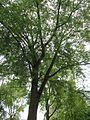 20120828Bismarckstr Saarbruecken6.jpg