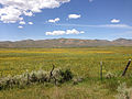 2014-06-24 11 24 16 Meadows along the Bruneau River south of Charleston, Nevada.JPG