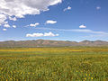 2014-06-24 11 24 38 Meadows along the Bruneau River south of Charleston, Nevada.JPG