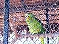 20170802 Bolivia 0887 Santa Cruz sRGB (37270761294).jpg