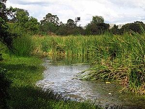 Wetlands of Bogotá - Humedal Santa María del Lago