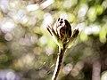 20180508-154822 Color Spring Garden Bokeh - Flickr - torstenbehrens.jpg