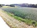 24601 Wankendorf 12.jpg