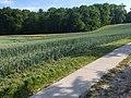 24601 Wankendorf 27.jpg