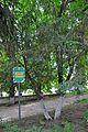 46-101-5022 Lviv Mushaka 54 Taxus Baccata RB.jpg