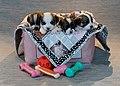 4 Puppies in a basket.jpg