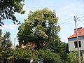 578. kasztan jadalny gdansk.jpg