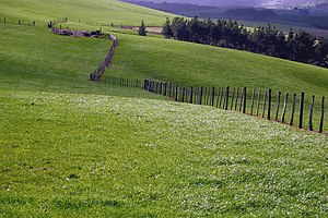 Northland Region - Fence on a sheep farm