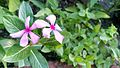 A Beautiful Unknown Flower.jpg