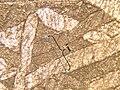 A Kaposfüred vasmeteorit sávjainak szélesége.jpg