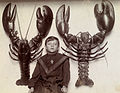 A boy between two mounted lobsters caught off the New Jersey coast.jpg