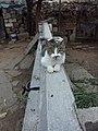 A cat sitting on a bar 20140905.jpg