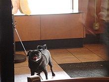 A dog in Starbucks - panoramio.jpg