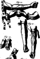 A general system of surgery Fleuron T114320-25.png
