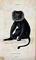 A macque monkey of the genus macacus silenus sitting on the Wellcome V0020762ER.jpg