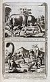 A variety of animals from different parts of the world, incl Wellcome V0022884.jpg