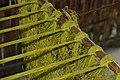 Abaca weaving bohol bee farm 2017.jpg