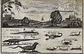 Above, English and Dutch Forts in Accra; below, animals, inc Wellcome V0022832.jpg