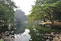 Acharya Jagadish Chandra Bose Indian Botanic Garden - Howrah 2011-01-08 9741.JPG