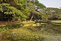 Acharya Jagadish Chandra Bose Indian Botanic Garden - Howrah 2011-01-08 9767.JPG