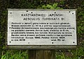 Aesculus turbinata, Kornik (2).JPG