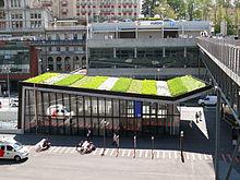 création mur végétal
