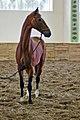 Ahal Velayat Hippodrome - Flickr - Kerri-Jo (144).jpg