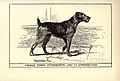 Airedale Terrier BDL.jpg