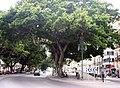 Alameda principal Malaga.jpg