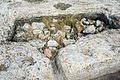 Aljibe ibérico en Castellar de Meca 12.jpg