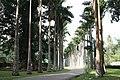 Alley in Royal Botanical Gardens.jpg