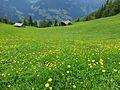 Alm Mayrhofen.jpg