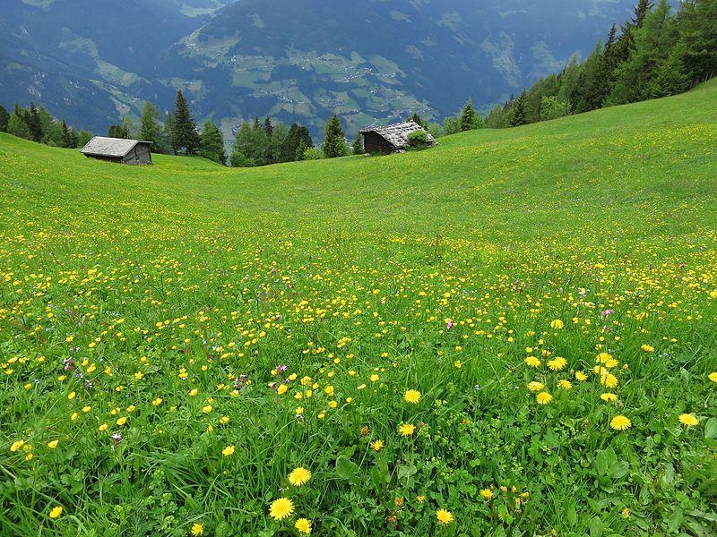 File:Alm Mayrhofen.jpg