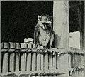 Am Tendaguru - Leben und Wirken einer deutschen Forschungsexpedition zur Ausgrabung vorweltlicher Riesensaurier in Deutsch-Ostafrika (1912) (18166423321).jpg