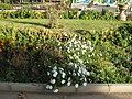 Amin al-Islami Park - Trees and Flowers - Nishapur 060.JPG