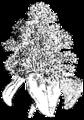 Androeceum, fig 2, Nordisk familjebok.png