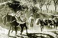 Anes transportant les vendanges à Chypre.jpg