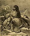 Animal life in the sea and on the land (1887) (14594098380).jpg