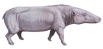 Anthracotherium cropped.png