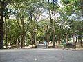 Aparición Quebrada de La Virgen de Coromoto.JPG