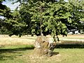 Arronville (95), croix près de la RD 927.JPG