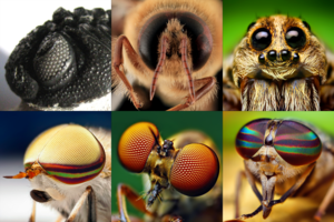 Arthropoda montage (eyes).png