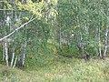 Asinovsky District, Tomsk Oblast, Russia - panoramio (211).jpg