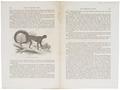 Ateles chacmek - 1700-1880 - Print - Iconographia Zoologica - Special Collections University of Amsterdam - UBA01 IZ20200101.tif