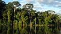 Atlantic Forest retusche.jpg